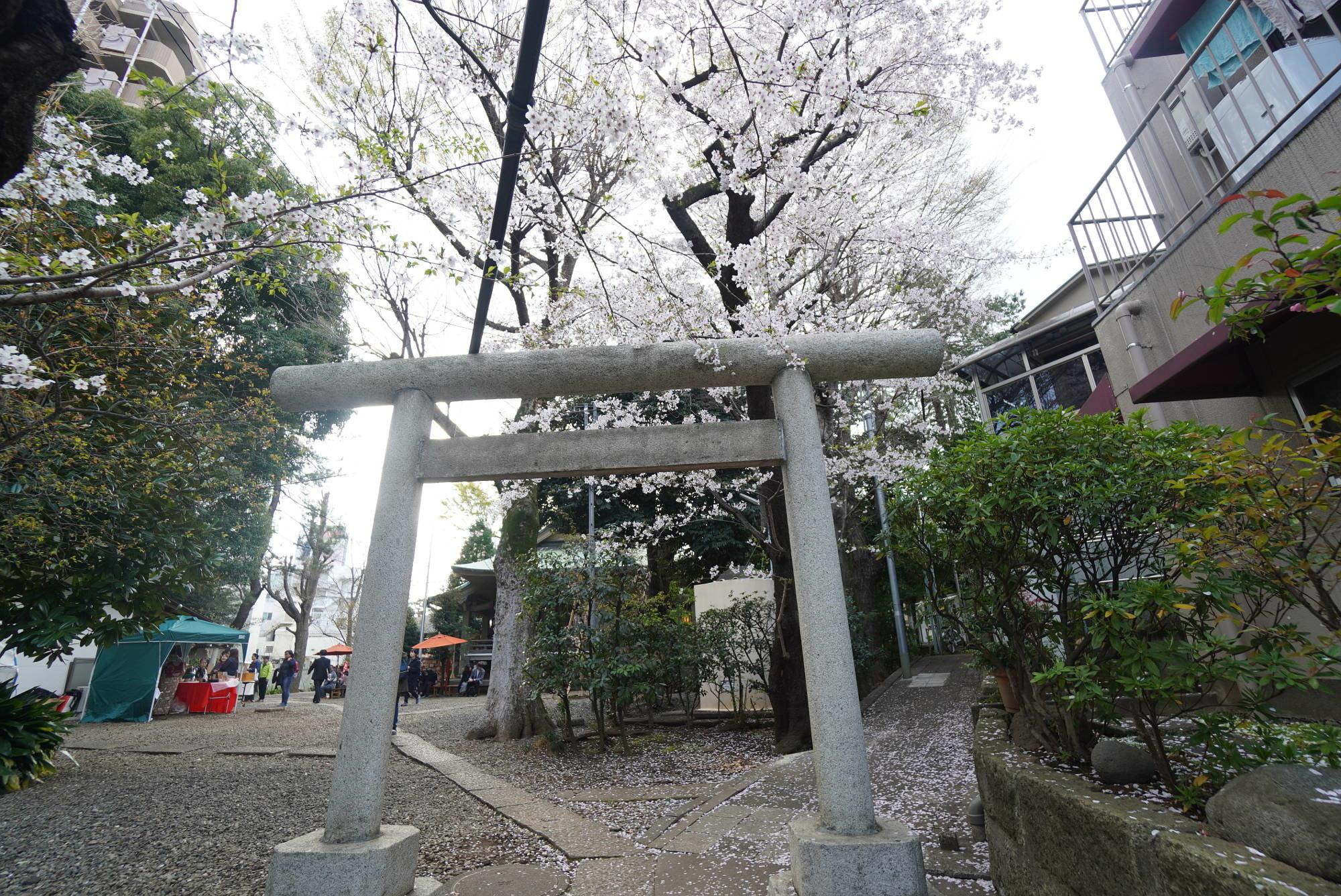 上目黒氷川神社の桜