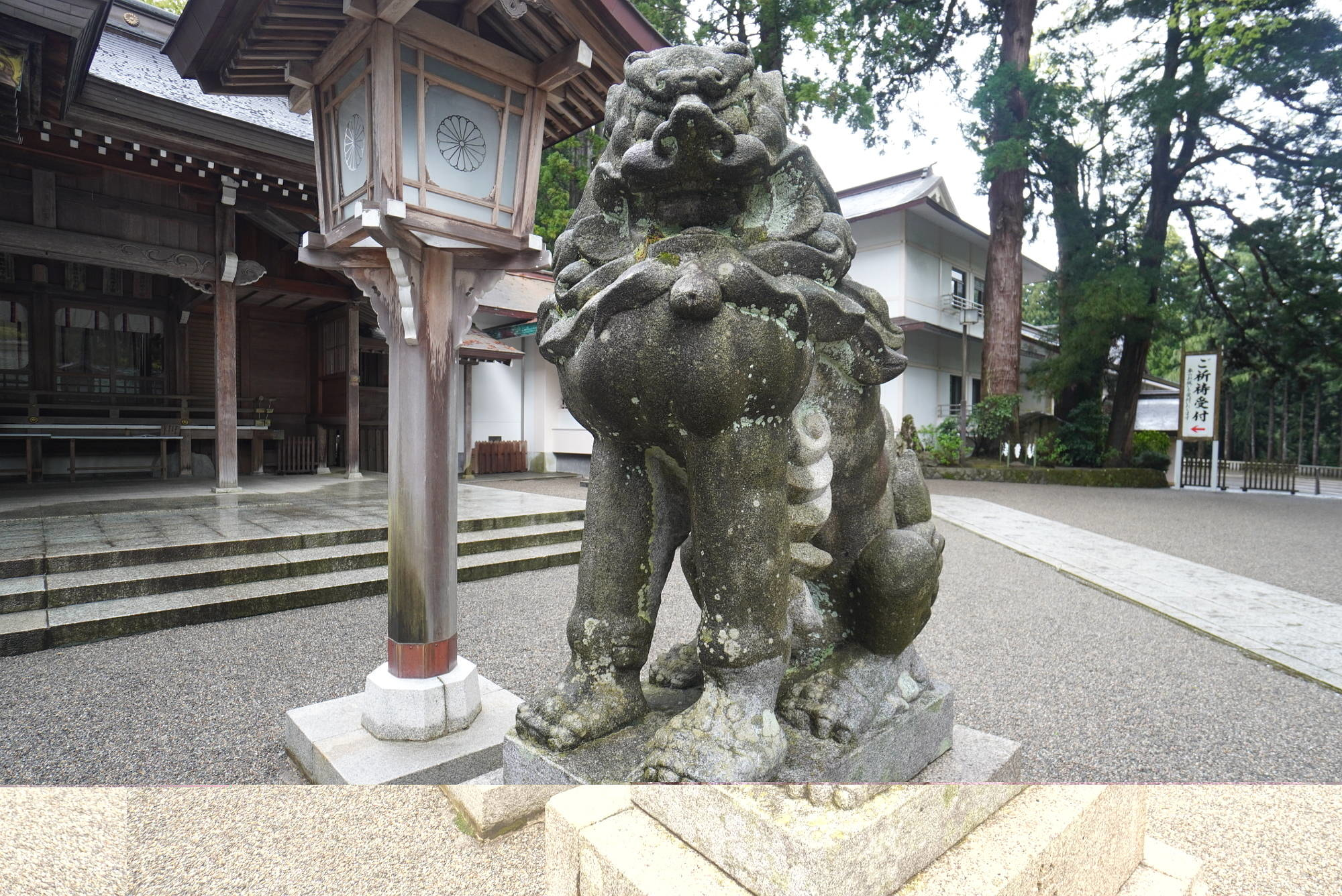 白山比咩神社の狛犬(右)