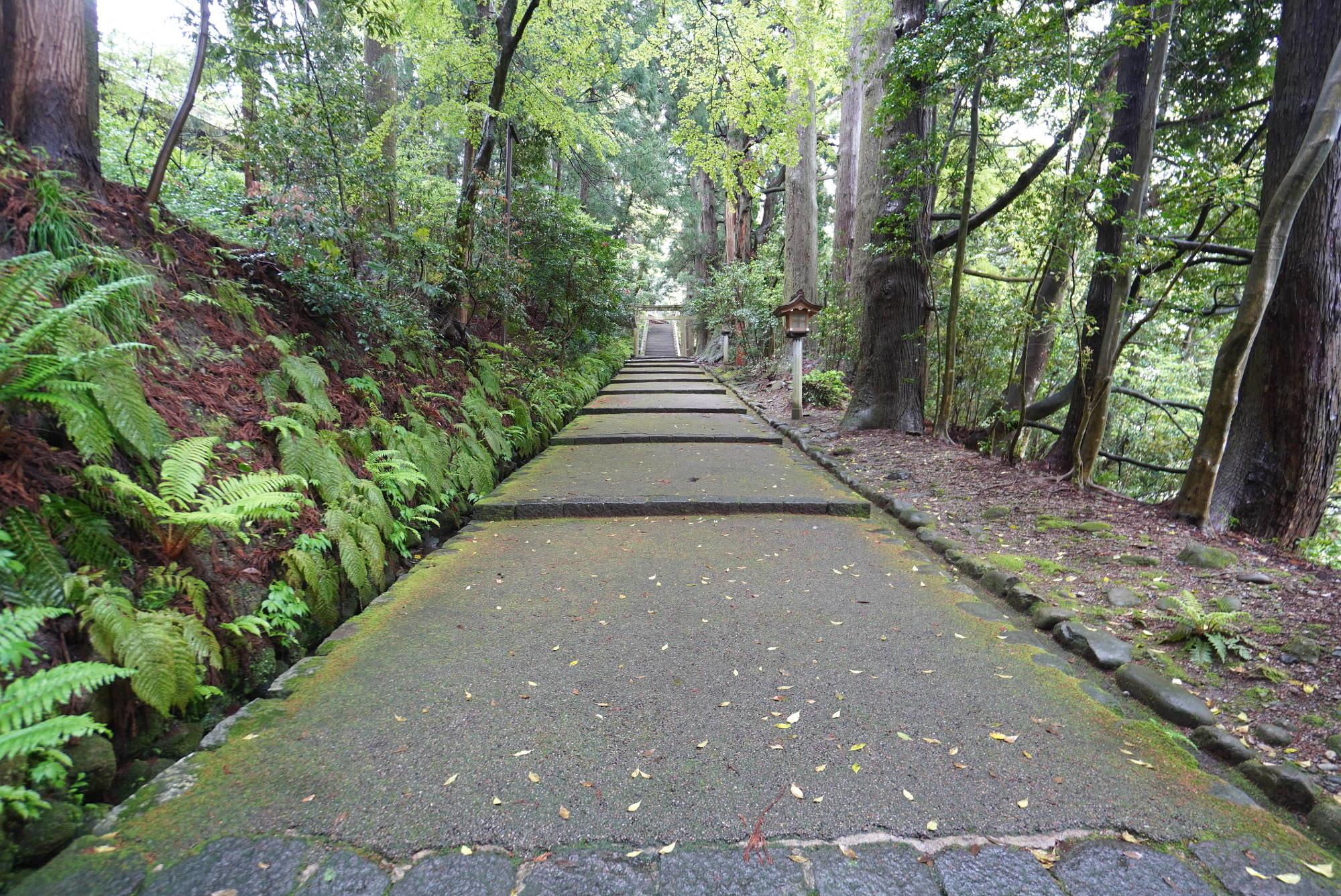 白山比咩神社の参道