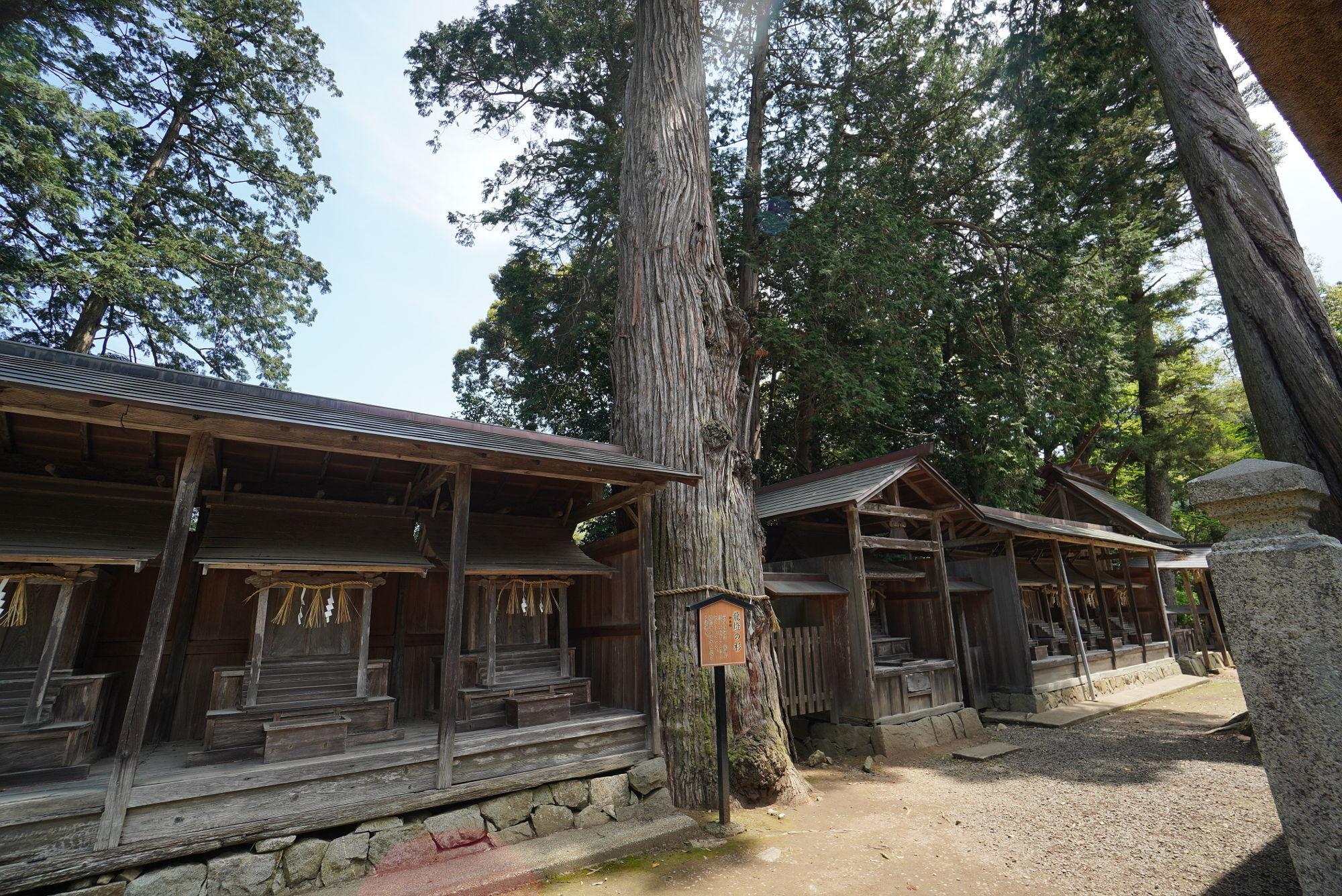 豊受大神社の御神木(龍燈の杉)