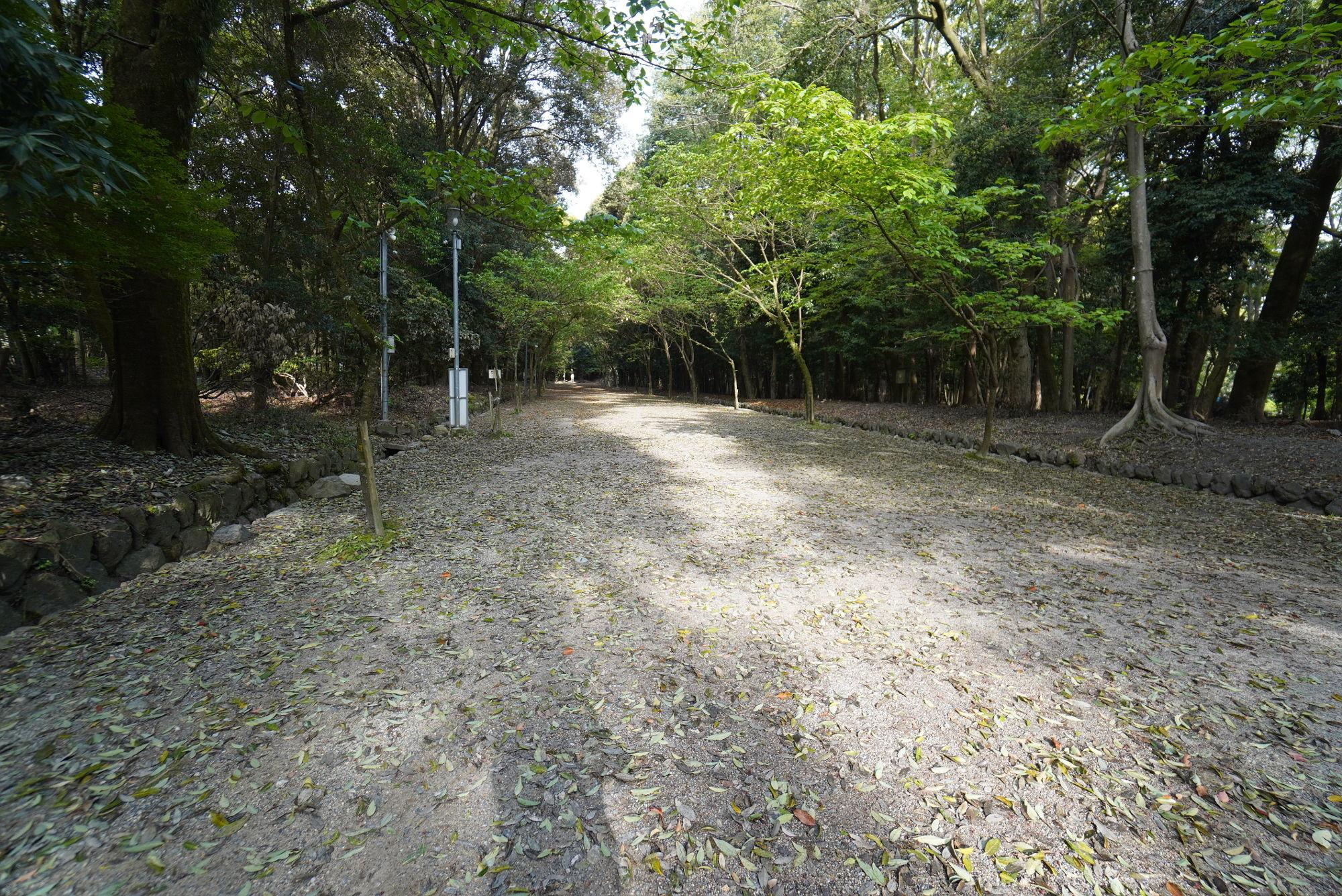 近江神宮「木洩れ日の道」